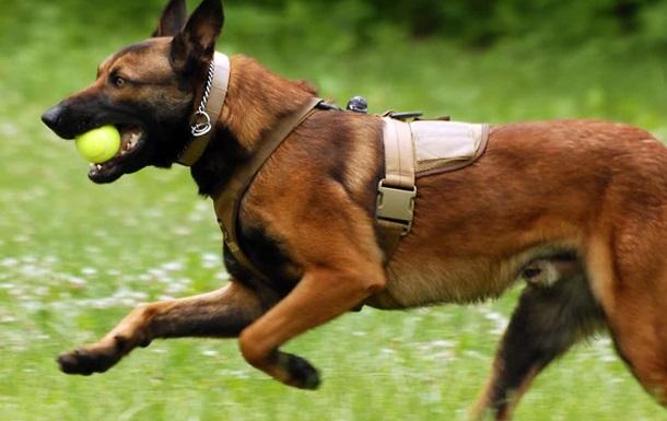 В российской полиции будут служить собаки-клоны