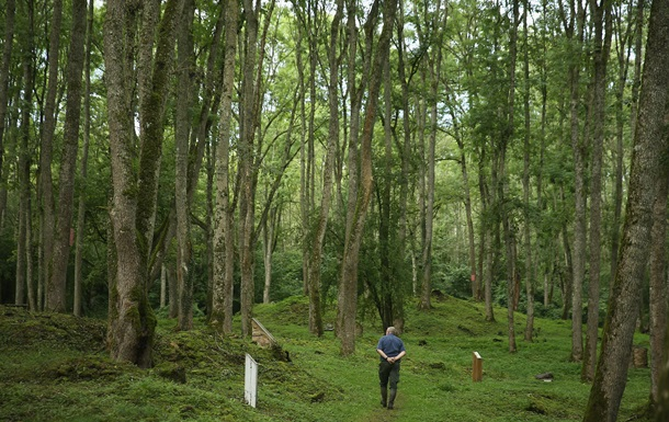Австрия и ФРГ помогут Украине подсчитать леса