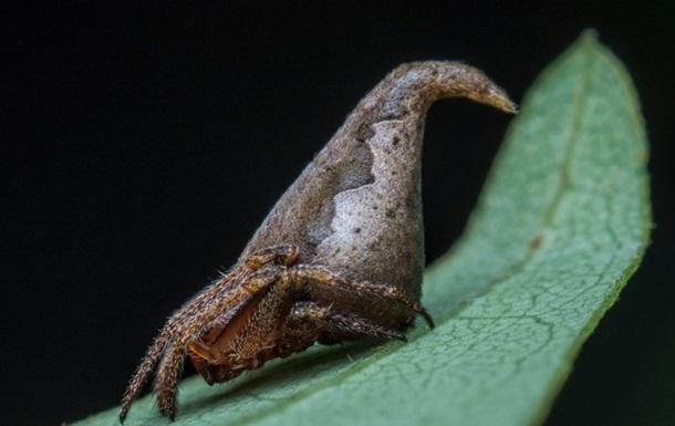 Новый вид пауков назвали в честь шляпы из  Гарри Поттера