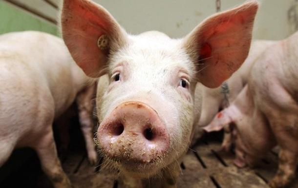 Украина в2014г. из-за больных свиней потеряла практически $5 млн.