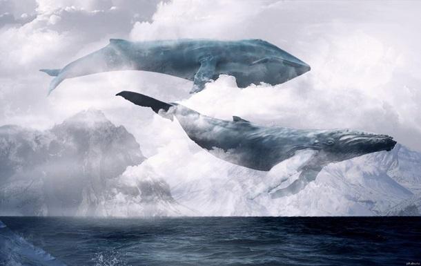 Море китов игра