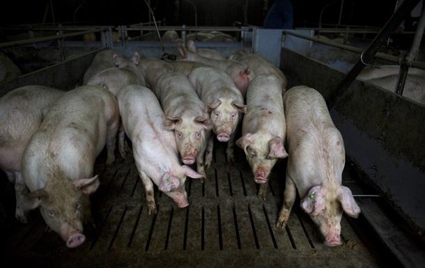 В Украине подорожала свинина