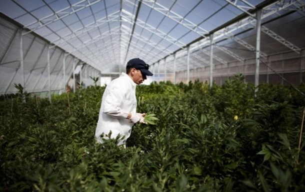 Законное выращивание марихуаны