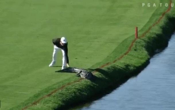Американец прогнал аллигатора с поля для гольфа