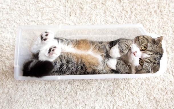 Наиболее популярный кот вмире попал вКнигу рекордов Гиннеса