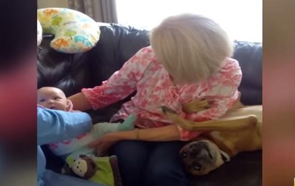 Требующий внимания пес притворился ребенком