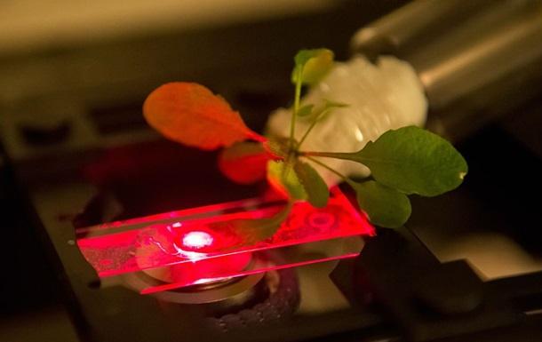 Ученые создали искусственную форму фотосинтеза