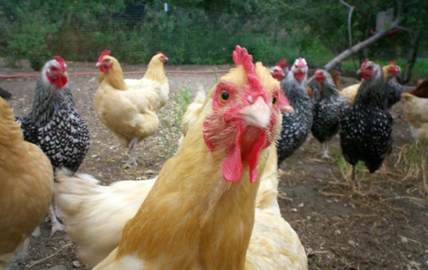 Україна відновила експорт птиці в Євросоюз