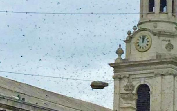 Рой пчел заблокировал движение в Лондоне