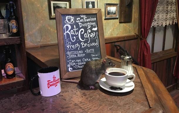 Кофе в компании крыс: в США открыли новое кафе