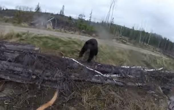 В Сети показали медведя атакующего охотника