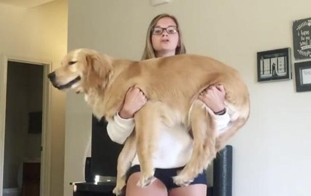 В Сети стартовал флешмоб  Приседай с собакой