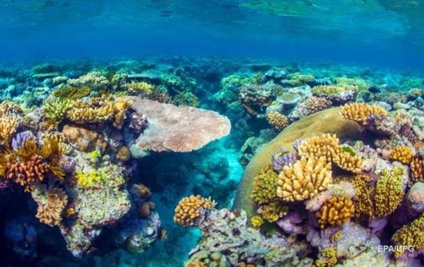 Большой Барьерный риф признан too big tofail для Австралии