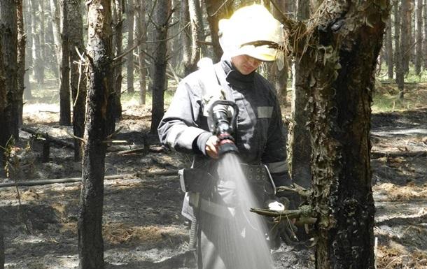 На Херсонщине масштабный лесной пожар