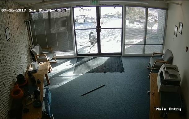 Громящего офис козла сняли на видео