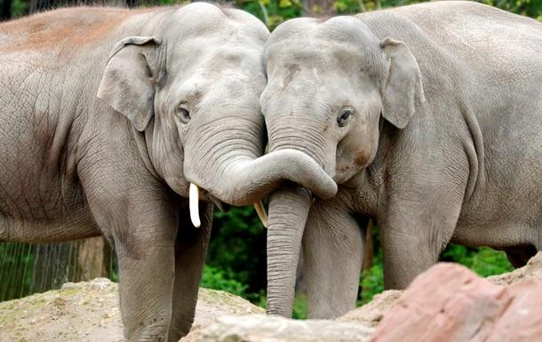 На Шри-Ланке спасли двух слонов, унесенных в море