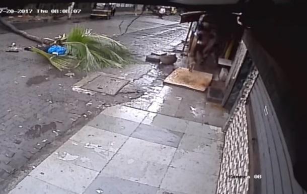 В Индии ведущую убило пальмой