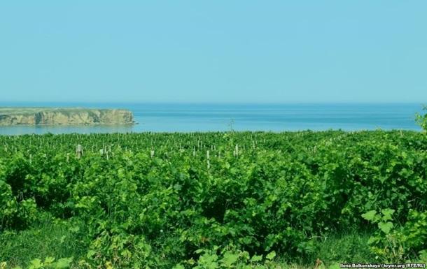 В Крыму площадь виноградников сократилась втрое