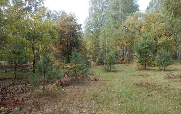 В Киевской области застрелили двух лесников