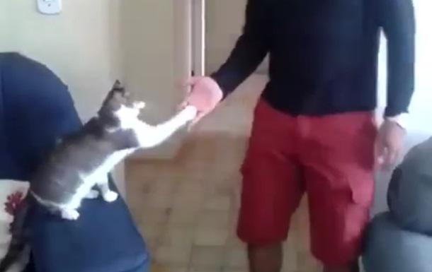Мастерски дающего  пять  кота сняли на видео