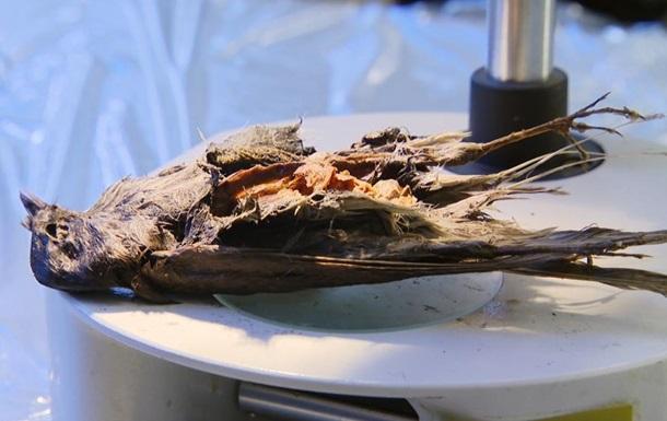 В Норвегии ученые обнаружили останки птицы возрастом 4200 лет