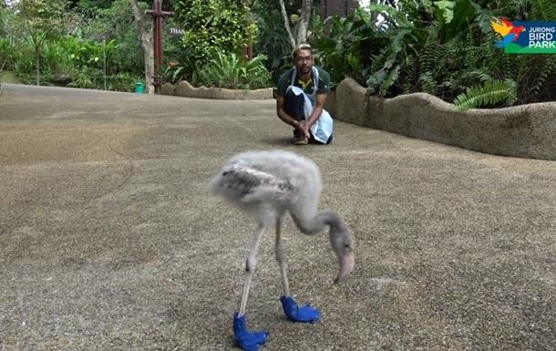 Гуляющий в ботинках птенец фламинго повеселил Сеть