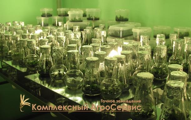 Клональное микроразмножение растений – для тех, кто ценит время