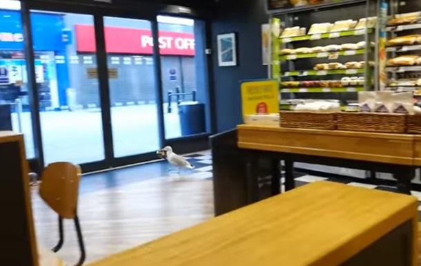 Обворовавшую магазин чайку сняли на видео