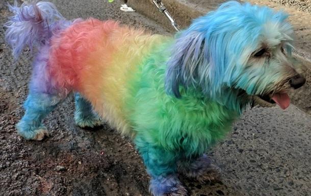 На ЛГБТ-марше собак украсили радужными флагами