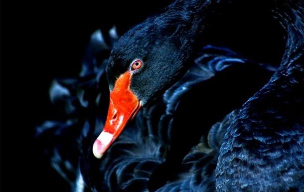В ожидании «чёрного лебедя»