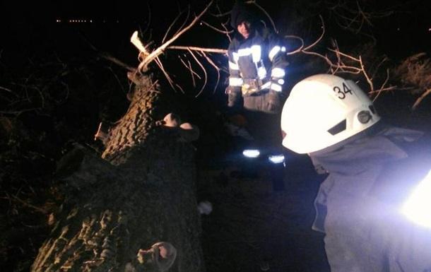 НаКиевщине из-за падения дерева погибла женщина