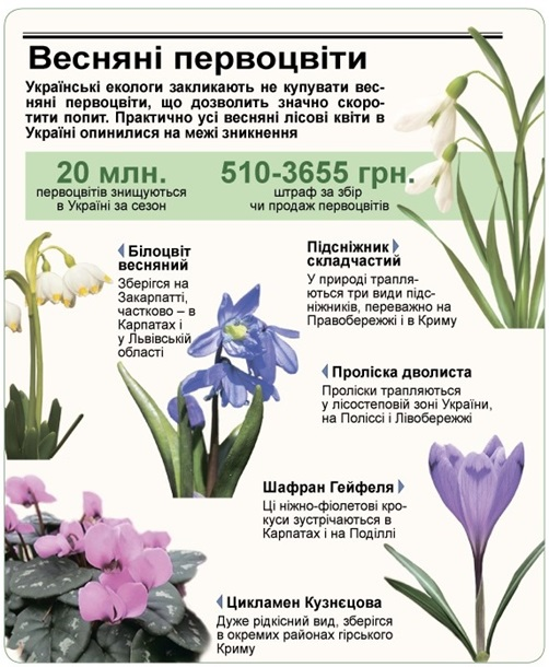 В Минэкологии напомнили о серьезных штрафах за торговлю первоцветами