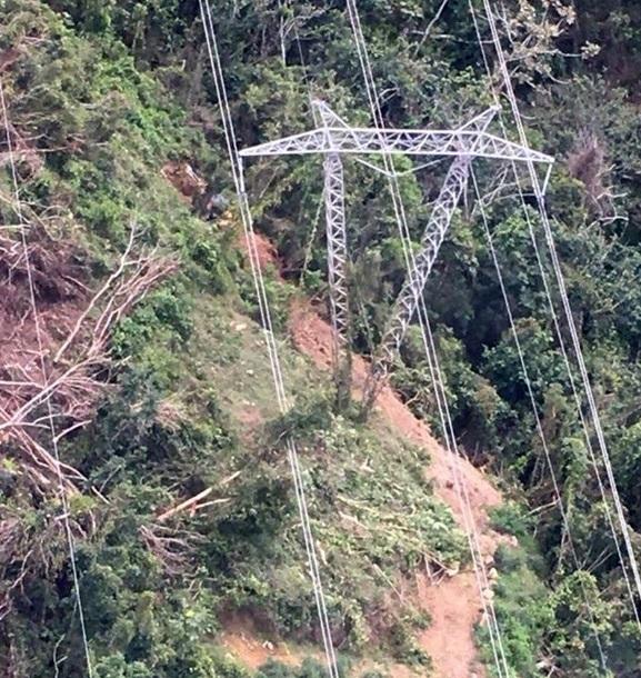 В Пуэрто-Рико из-за упавшего дерева без света остались 870 тысяч человек