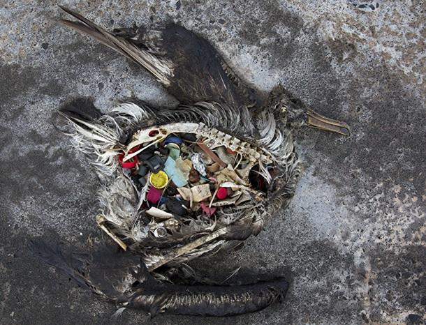 Прокляття морів. Пластик убиває мільйони тварин