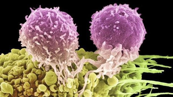 Нобелевская премия 2018 по медицине от рака