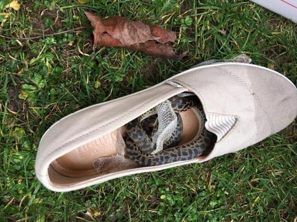 Змея пролетела в обуви туристки 15 000 км