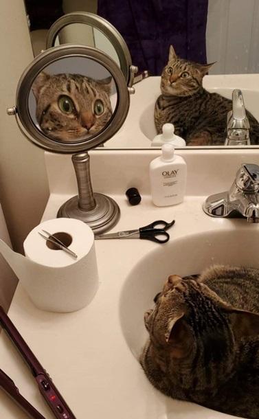 Удивленный своим отражением кот рассмешил Сеть