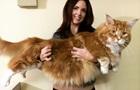 СМИ показали  самого длинного в мире  кота
