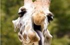 ЗМІ показали  найбільш невдалі  фото тварин