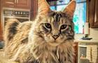 У США оголосили нагороду в $100 тисяч за зниклих котів