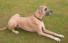 Ученые назвали собаку средством от инфаркта