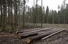 Польщі загрожує серйозний штраф за вирубку Біловезької пущі