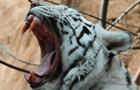В России посетители зоопарка напали на животных