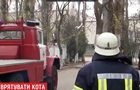 В Одесі кота понад дві доби знімали з дерева