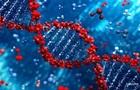 Вчені вперше розшифрували гени гомосексуальності