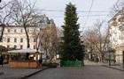 В Одесі для ялинки на Дерибасівській зрубали 400 сосен