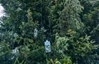 Головну ялинку України прикрасили гірляндами