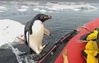 Пингвин запрыгнул в лодку к ученым  для инспекции