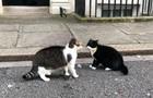 В Лондоне подрались коты премьера и главы МИД