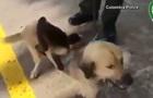 У Мережі показали собаку, що всиновила мавпу
